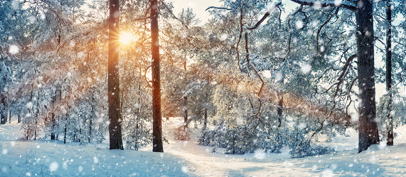 Sunlight shining through snow covered trees