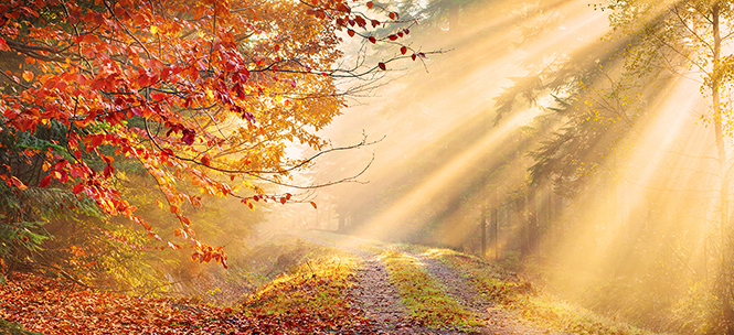 country road in autumn with sun rays shining diagonally.